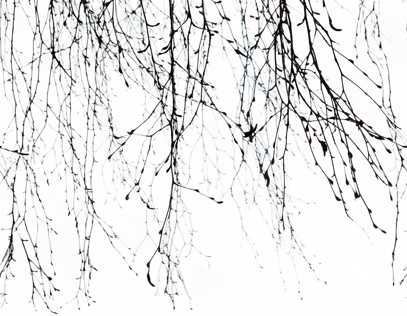 branches_whole-pattern