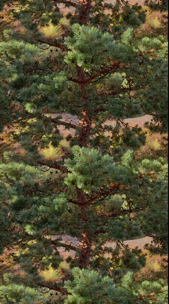 Pine repeat