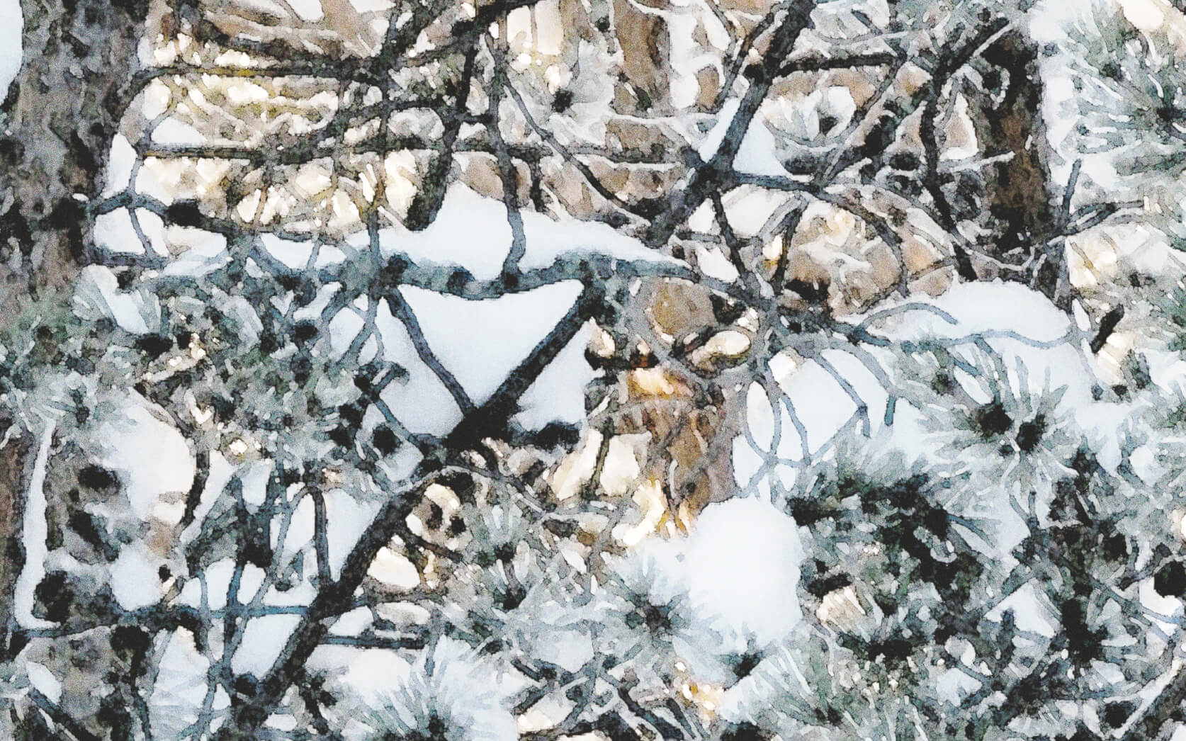 Pine Winter