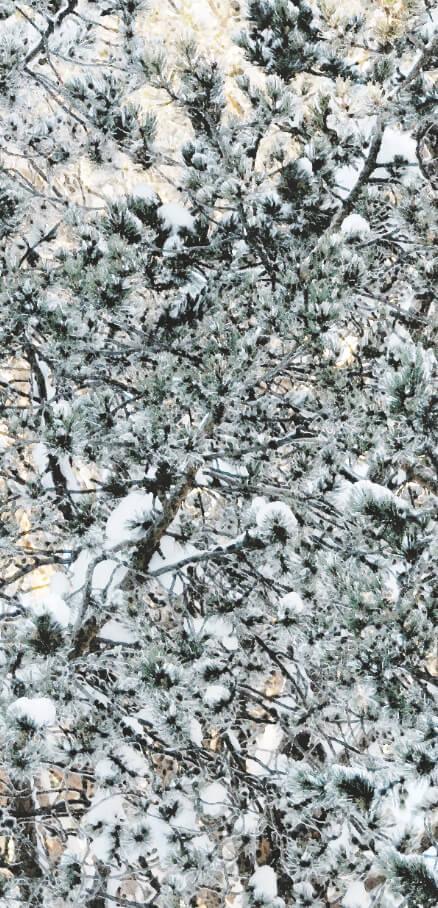 Winterpine 2